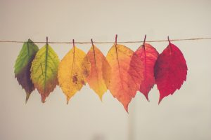 organic dry cleaners leaves hanging